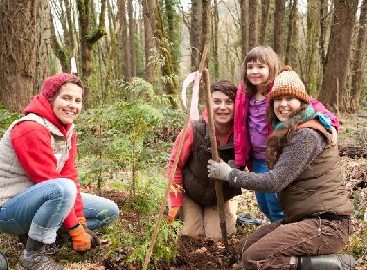 Dedicate a Gift Tree