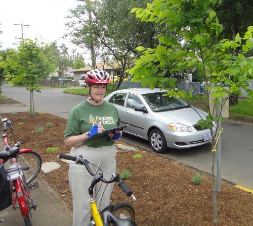 Summer Tree Inspector